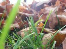 mopana-leaves-we-ll-never-fall- alone-02
