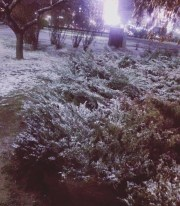 mopana-First-snow-03