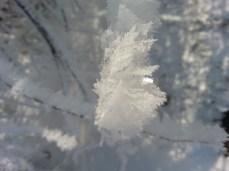 mopana-little-snowflake-03