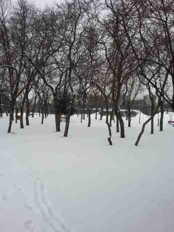 snow-in-the-park-01