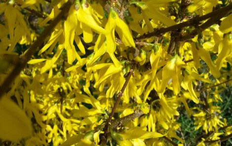 golden-spring-03