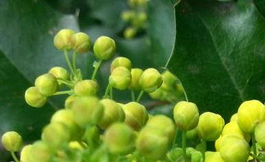 green-spring-04