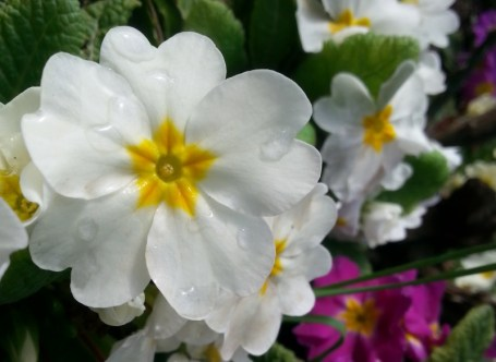 spring-dew-02