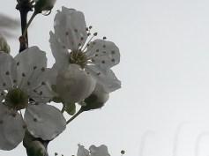 spring-dew-10