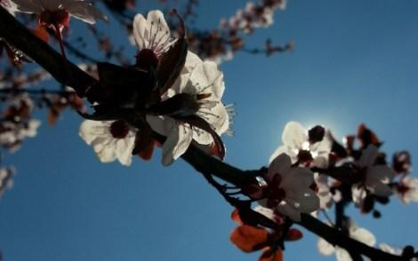 mopana-nature-splendor-02