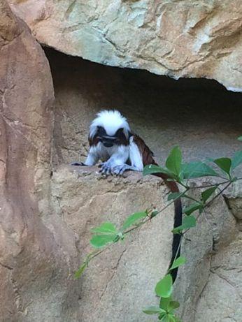 mopana-monkeys-vienna-aquarium-05