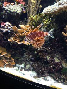 mopana-vienna zoo-aquarium-01