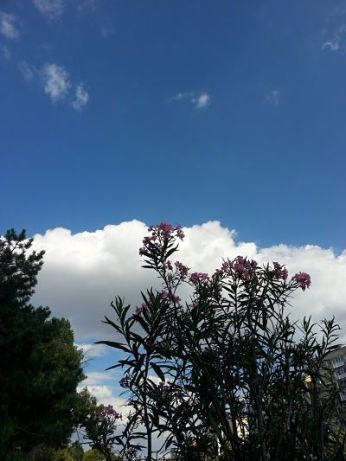 mopana-flowers-among-clouds-01