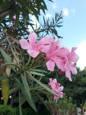 mopana-flowers-among-clouds-04