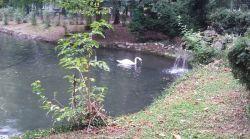 mopana-ducks-and-swans-01