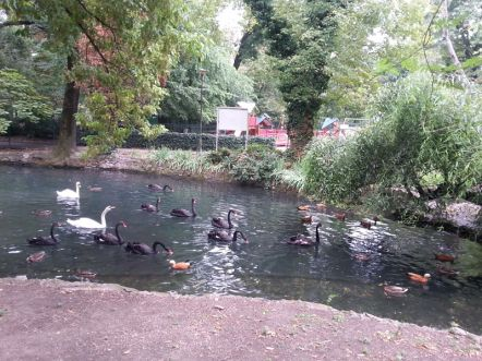 mopana-ducks-and-swans-03