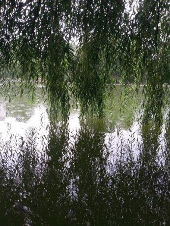 mopana-raining-in-the-park-01