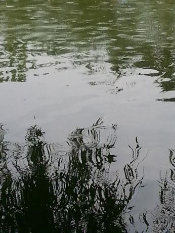 mopana-raining-in-the-park-02
