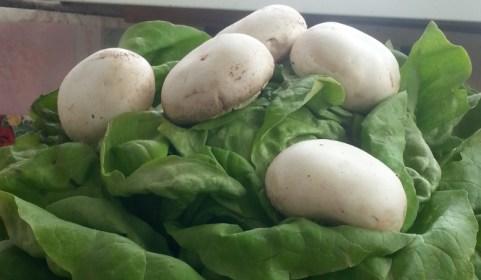 mopana-champignon-mushrooms-01