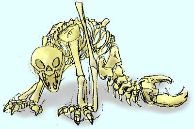 ディーラの骨