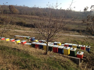 One thing I have learned from my time in Eastern Europe: where there are monks, there is sure to be bee-keeping. And excellent honey.