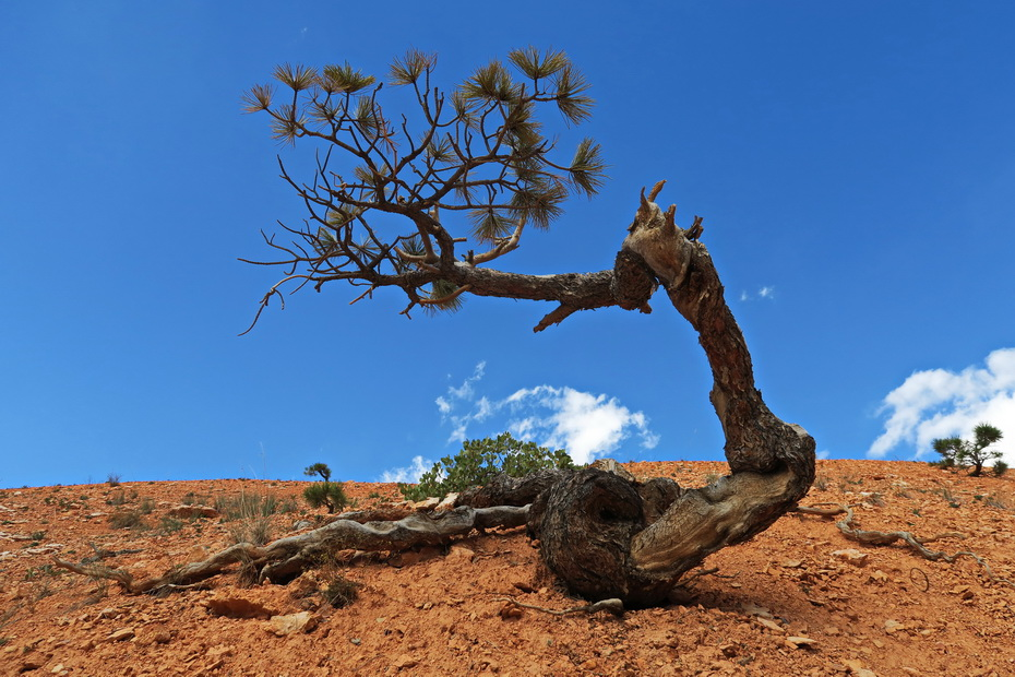 Bryce Canynon National Park