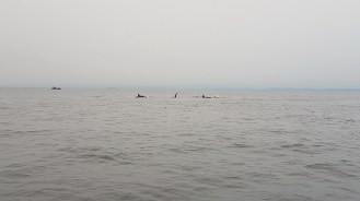 Whale Watching Vancouver