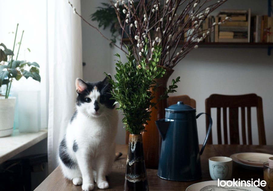kotek na stole