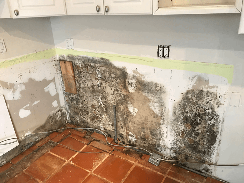 Black Mold - How Dangerous & Toxic Is It | Lookmold