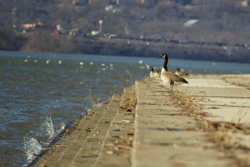 A public park that runs parallel to Susquehanna River, Riverfront Park is one of the most famous tourist destinations in Harrisburg, PA.