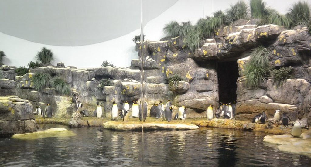 Moody Gardens is one of the top places to visit in Texas along with family because it has something for everybody