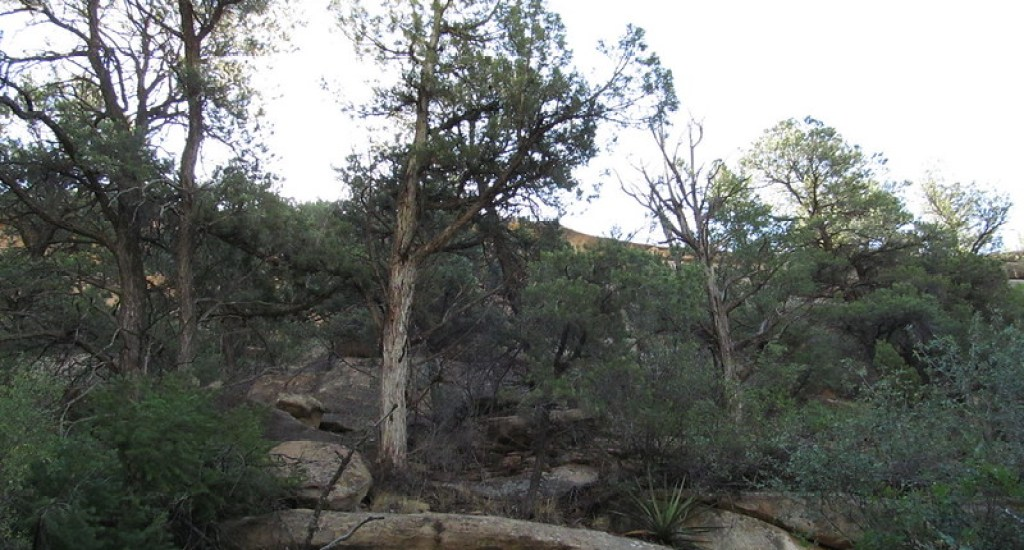 Spruce Tree House - Mesa Verde National Park - Colorado