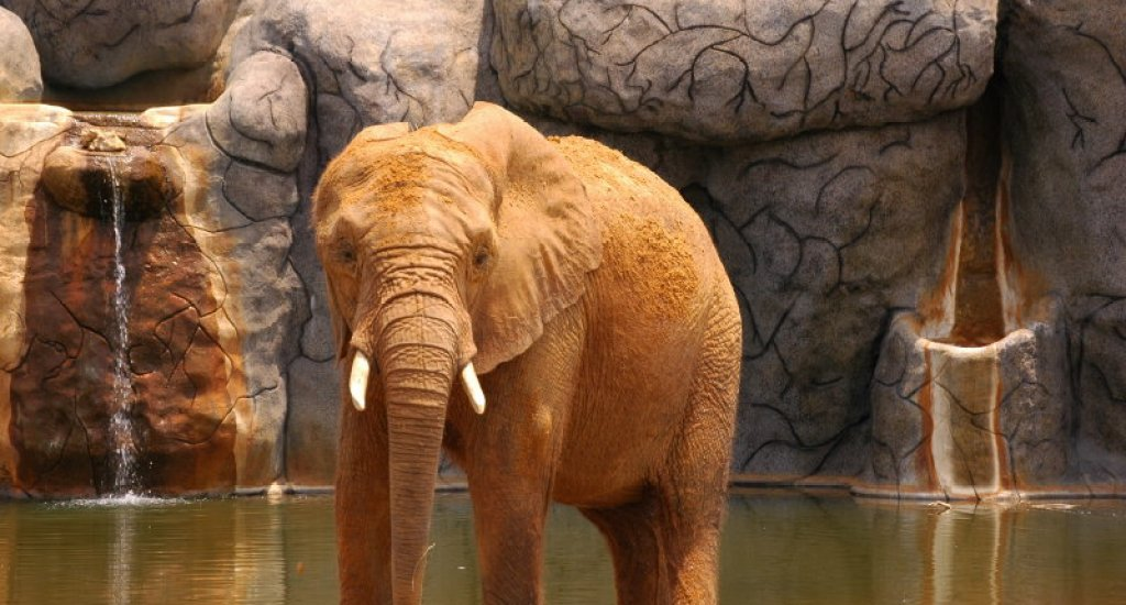If you are with kids, then visiting the Montgomery Zoo should be high on your list of things to do and see