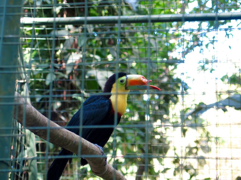 Rescue Tucan with an injured bill