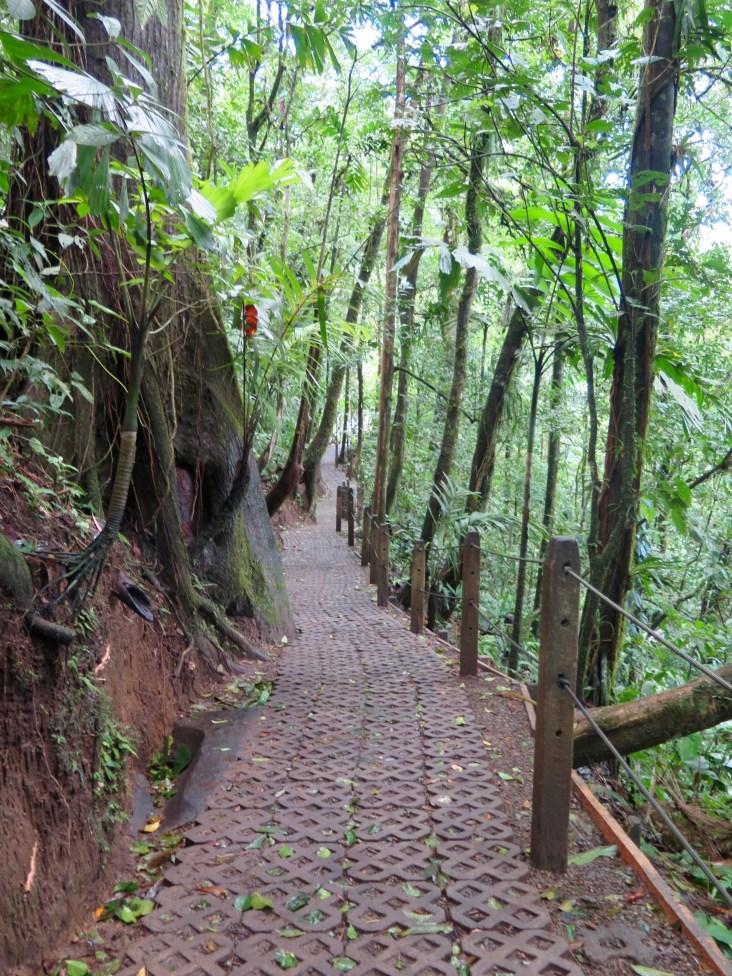 Trail through the rainforest