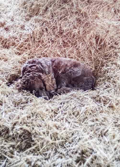 hund-im-stroh-gralhof-winter