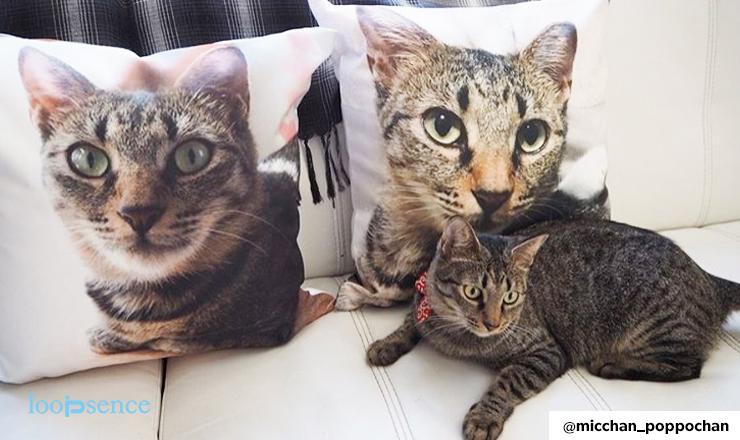 猫のオーダークッション紹介