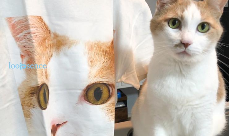 愛犬、愛猫のオーダーTシャツ メインクーンの小次郎ちゃん