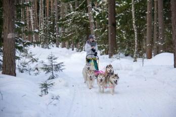 dmitrov-dogsledding-22