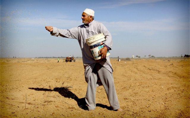 Inseguridad alimentaria en Irak es causada por conflicto: FAO - Internet