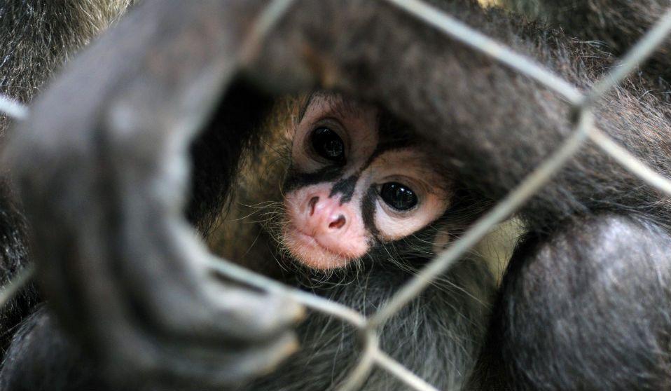 Hay más tráfico de animales que de armas en México - Foto de TN