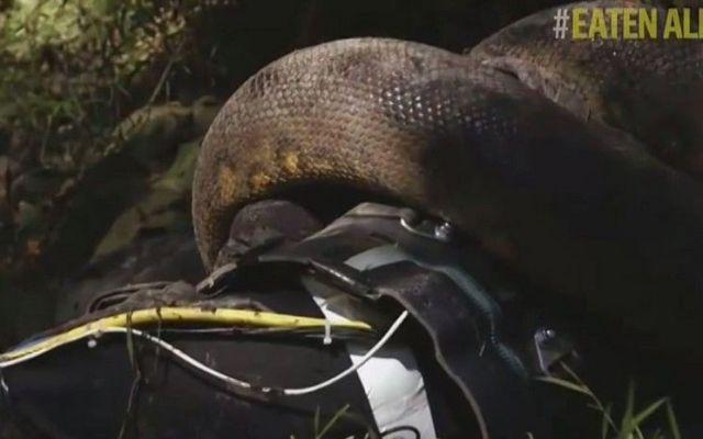 Fracasa protagonista de programa al dejarse devorar por anaconda - Internet