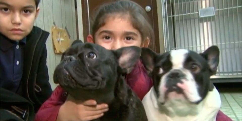 Cámara capta a hombre robando cachorros en camioneta de FedEx - Foto de NBC