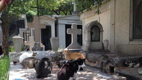 Continúan asesinatos de gatos en Panteón Francés - Foto de Change.org