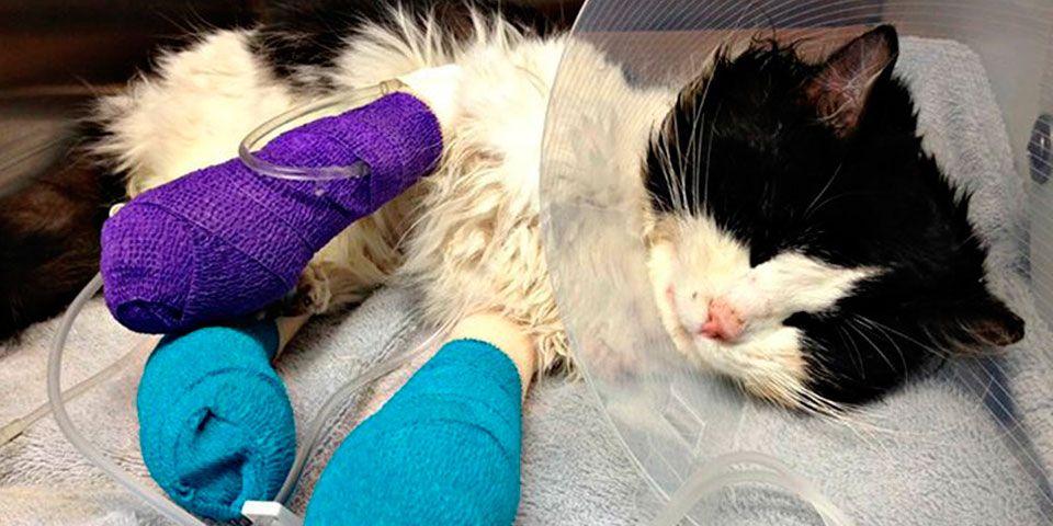 Recaudan más de 21 mil dólares para ayudar a gato - Foto de GoFundMe