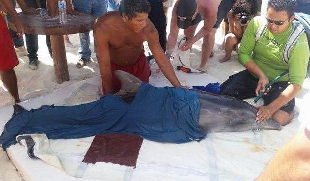 Logran rescate de delfín varado en Cancún - Foto de sipse.com