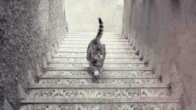 Después del vestido: ¿El gato sube o baja las escaleras? - gato