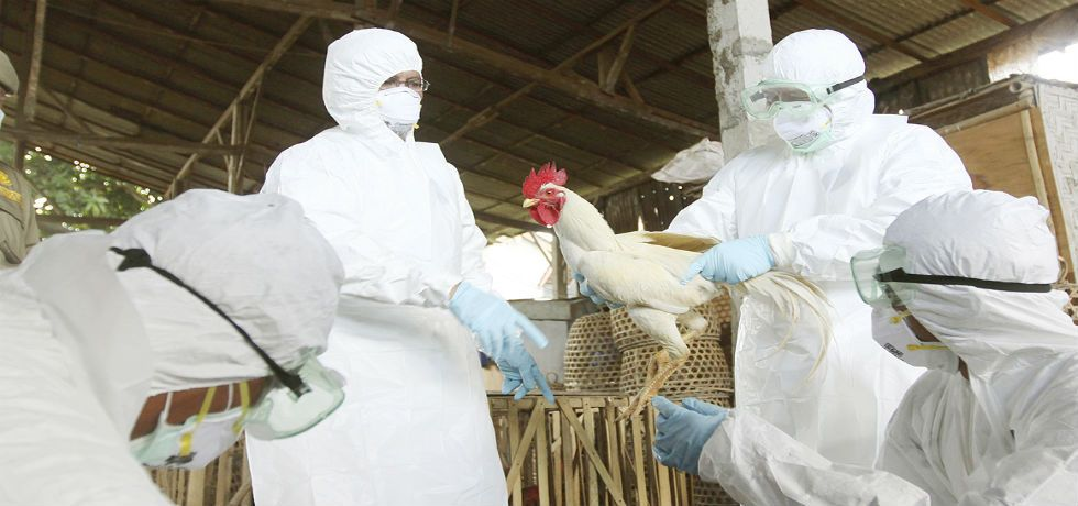 Confirman gripe aviar en Oaxaca y Puebla - Gripe avial