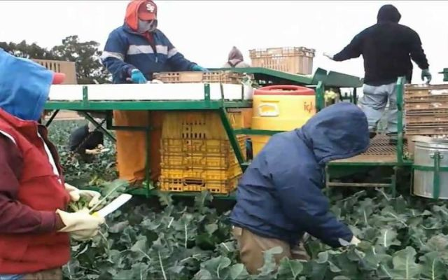 Mexicanos encabezan muertes laborales en EE.UU. - Migrantes mexicanos en Estados Unidos