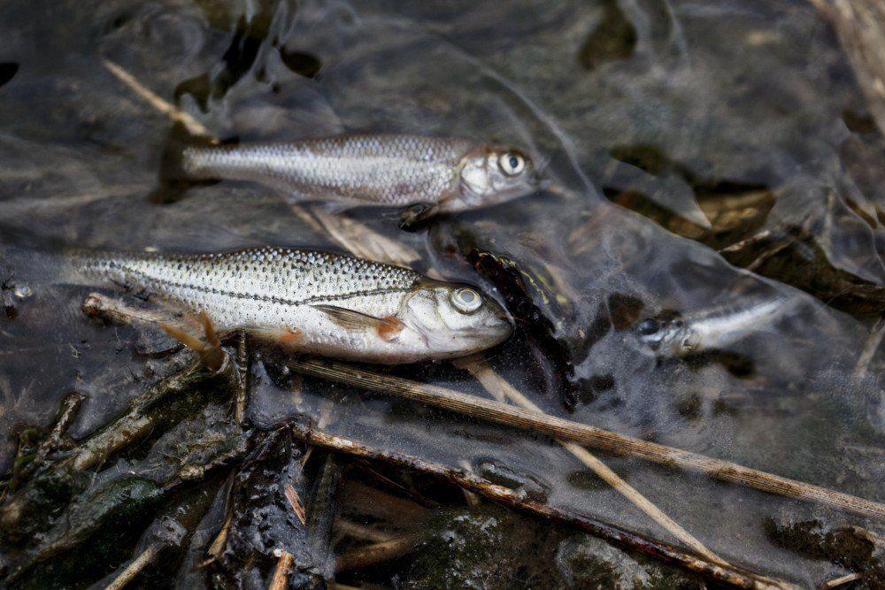 Pescadores mexicanos piden indemnización por desastre ecológico - derrame crudo