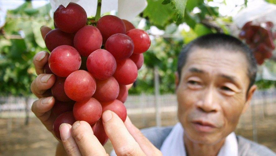 Subastan uvas por 8 mil 200 dólares en Japón - Foto de Japan Times
