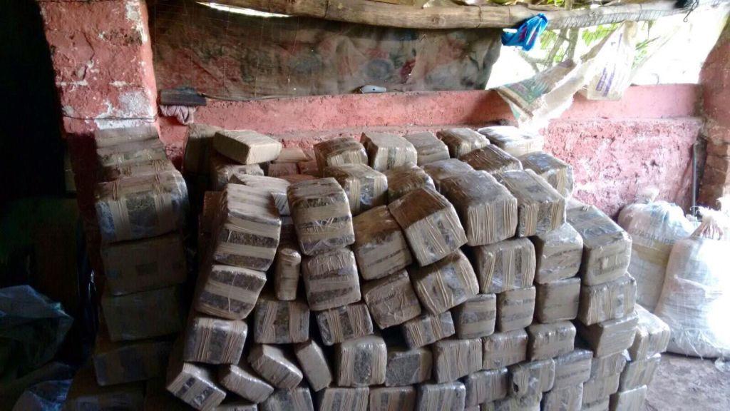 Encuentran casi 2 toneladas mariguana en Tamaulipas - Foto de PGR