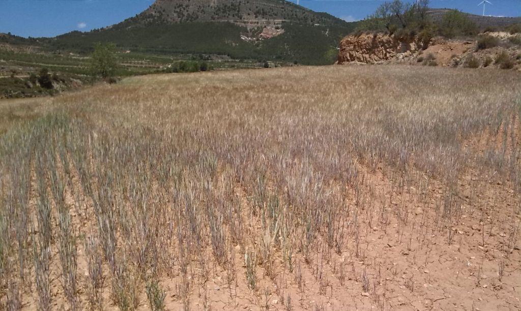 Guerrero enfrenta sequía ante escasez de lluvias