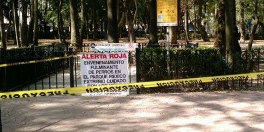 Raticida hallado en casa de anciana no mató a los perros: PGJDF - Continuarán vigilando la Condesa hasta atrapar a la mataperros - Foto de internet