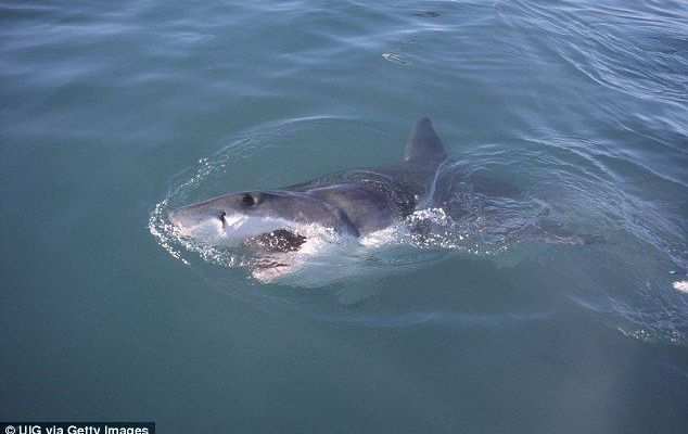 Ataque de tiburón salva a hombre - Foto de Daily Mail